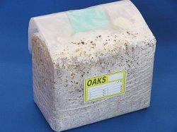 画像1: オークス菌床ブロック