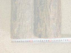 画像2: きのこ用 未植菌原木(大径2本)