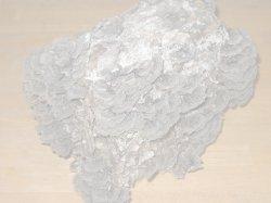 画像2: カワラタケ種菌[タネ駒200ヶ]